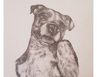 Staffie Pet Portraits. Pencil drawing. Made to order. Commissions welcome.