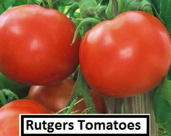 20 Seeds Comb S//H See our store! GREAT TASTE Rutger/'s Improved Tomato