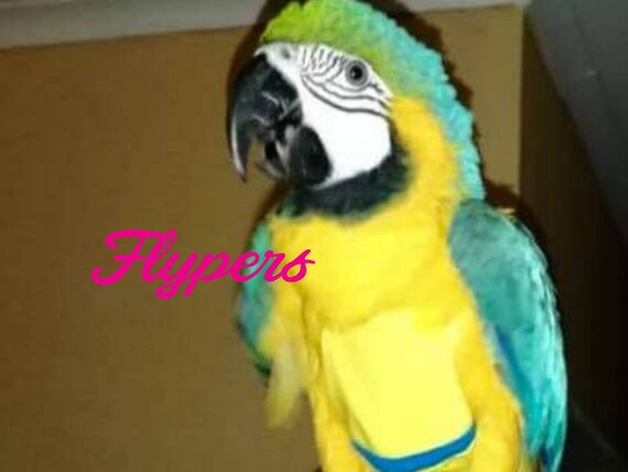 Size 14 Bird 850g – 1000g Diaper Flyper for Macaw/Blue and Gold  (young)/Scarlet/Military, Cockatoo Palm harness flight suit with leash ring