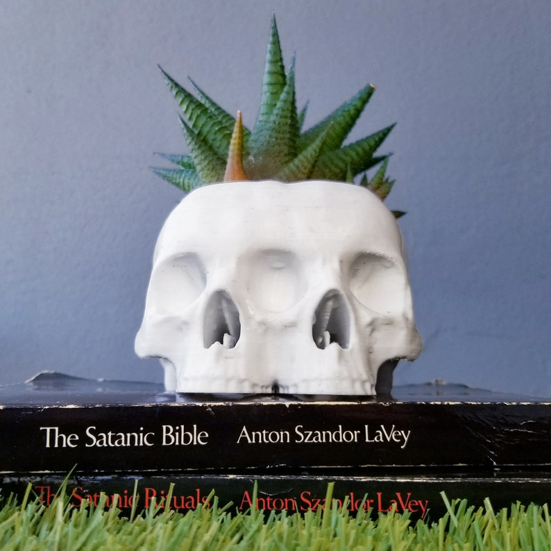 Conjoined Skull Succulent Planter  Gothic Home Decor Goth image 1