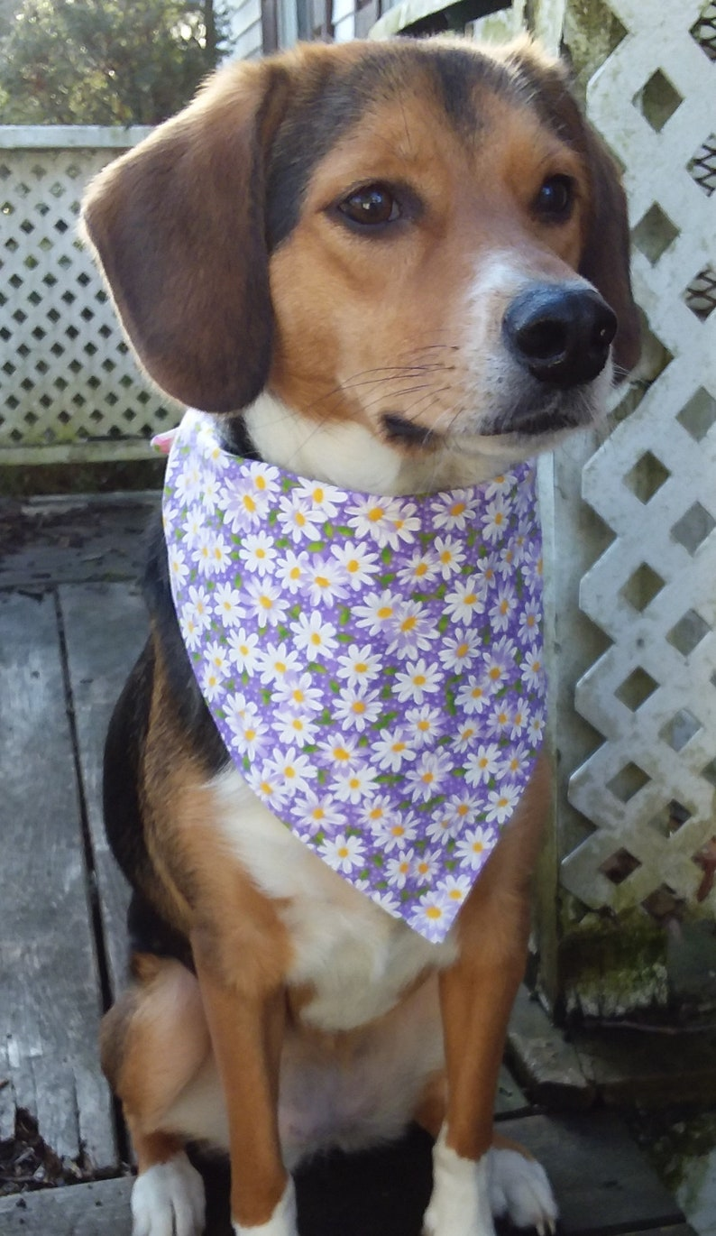Must Select Two The Galaxy is the Limit and the Planets in Space Beyond Tie Around Pet Bandana One Half
