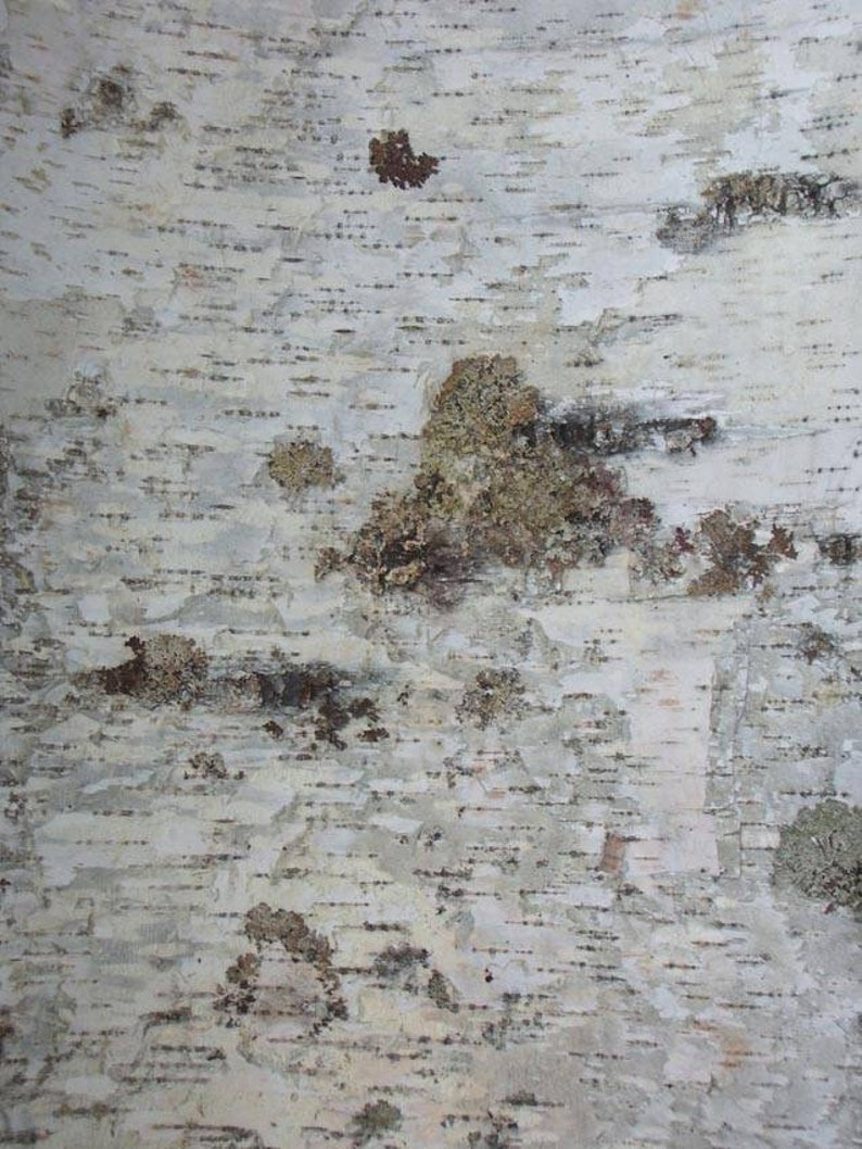 Birch bark 2in by 2in pieces 100 piece order
