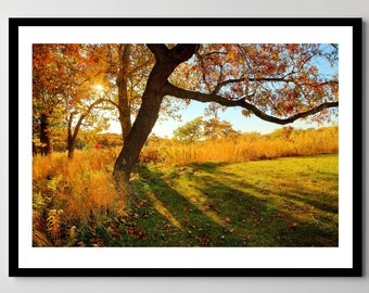 Fall at Marquette Park in Gary, Indiana - Framed Photo, Ready-to-Hang