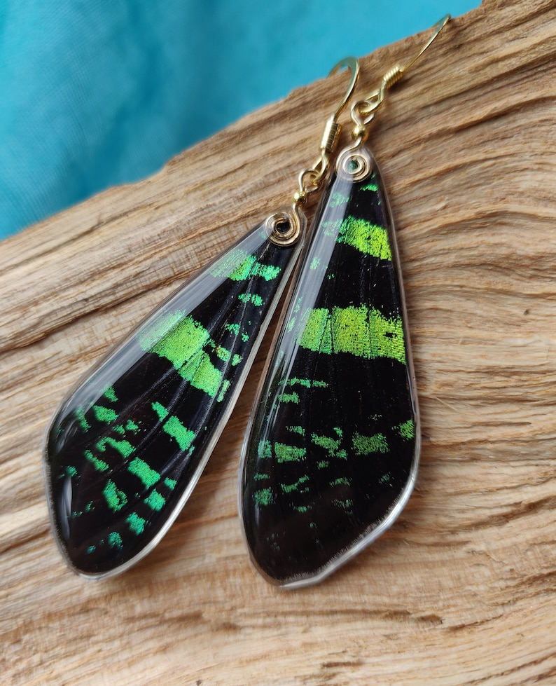Sunset real Moth earrings in gold resin green iridescent ethically sourced real moth Butterfly wing earrings with sterling silver and gold
