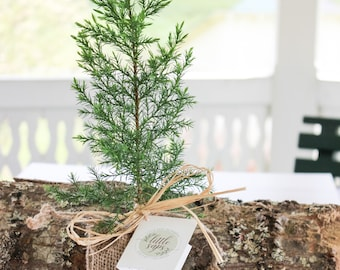 Your Loved One Gift Tree | Memorial Gift Tree | Sympathy Gift Tree | Plant in Memory of Your Loved One
