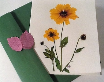 card making natural dried Edelweiss 20pcs Silver J Pressed flowers Floral art craft