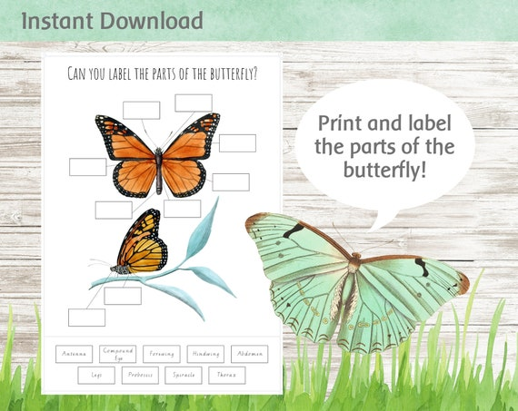 Label the Parts of the Butterfly Printable Worksheet  Nature