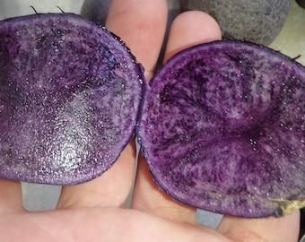 ORGANIC All Blue 5 Potato tubers, Purple Potato Solanum tuberosum Unique garden