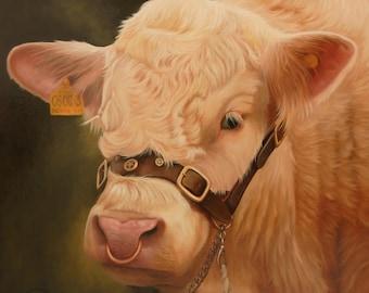 Charolais Bull Canvas Wall Art Print by Irish artist Keith Glasgow
