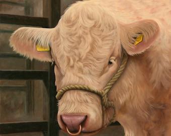 Charolais Bull Farming Animal Cattle Canvas Print Irish artist Keith Glasgow