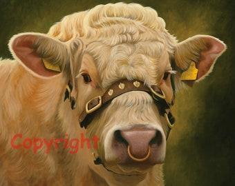Charolais Bull Head Canvas Picture Print artist Keith Glasgow Farm Animal Cattle