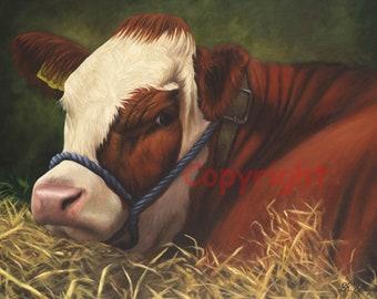 Simmental Calf Farm Cattle Canvas Wall Art Picture Print Artist Keith Glasgow