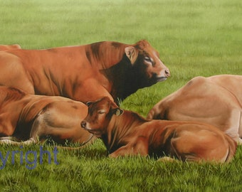 Limousin Cattle Canvas Picture Print artist Keith Glasgow Farm Animal