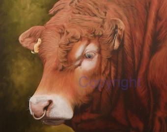 Limousin Bull Head Canvas Picture Print artist Keith Glasgow Farm Animal