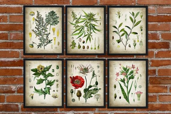 Drug Set of 5 Botanical Prints Cannabis Tobacco Opium Cocaine Absinthe Decor Art