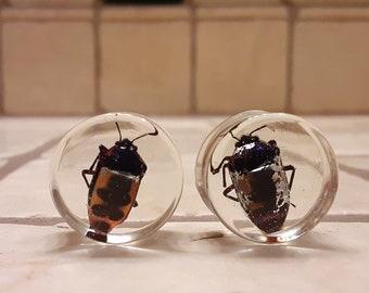 Resin Jewelry Resin Ear gauges Bug jewelry Bug wing Beetle wing ear gauges Resin Ear gauges Ear gauges Acrylic Bugs in resin Wings