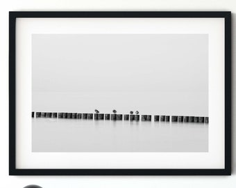 Photography groyne birds in black and white, 50 x75 cm, 60 x 90 cm, 70 x 105 cm, large poster