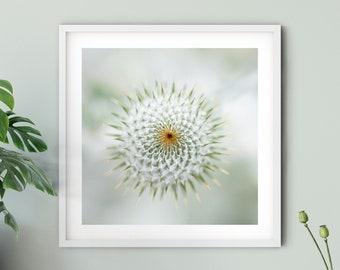 Nature photography thistle squared, 15 x 15 cm, 20 x 20 cm, 30 x 30 cm, print