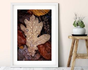 Photograph autumn sheet, large poster, 50 x75 cm, 60 x 90 cm, 70 x 105 cm