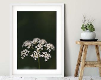 Photograph White umbel, 50 x75 cm, 60 x 90 cm, 70 x 105 cm, large poster