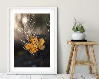 Photography autumn lights, large poster, 50 x75 cm, 60 x 90 cm, 70 x 105 cm
