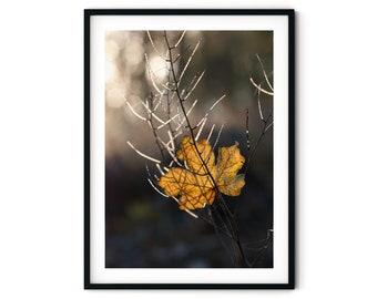 Photography Autumn Lights, 13 x 18 cm, 21 x 30 cm, 30 x 40 cm, Print, Poster