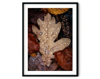 Photograph Autumn Sheet, 13 x 18 cm, 21 x 30 cm, 30 x 40 cm, Print, Poster