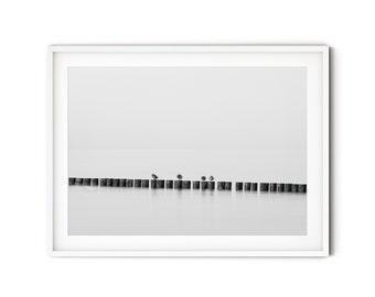 Photograph Of groyne birds in black and white, 13 x 18 cm, 21 x 30 cm (A4), 30 x 40 cm, print, maritime poster