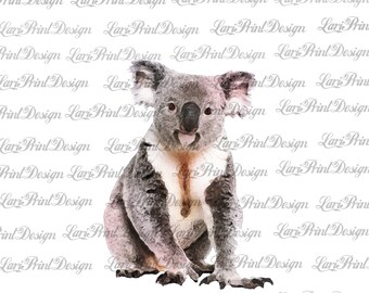 23af21b33 Koala Bear watercolor clipart, sublimation graphics, instant download, PNG