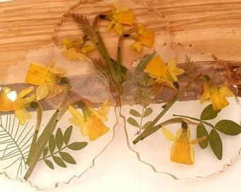 Beautiful botanical coasters -  trinket palette - pressed flowers - yellow - wild flowers coaster - daffodil tete ta tete.