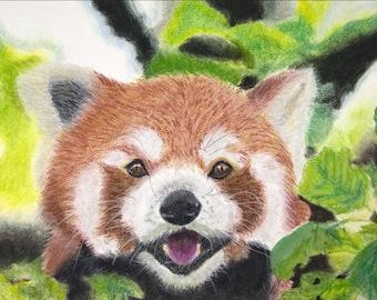 055168bf3 Red Panda on Tree - Pastel Pencil Print