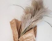 Dried Flower Arrangement - Giant Silvergrass / Miscanthus Giganteus
