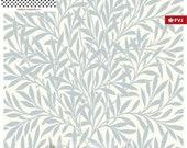 Jersey, FVJ, Miss of Julie white, grey leaves