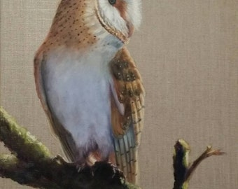 Barn owl on branch
