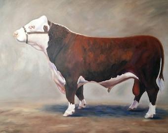 Ronaldo - Hereford Bull