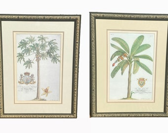 Tropical Prints. Botanical Prints. Pair of Prints. Palm Tree Print. Prince of Hefse. Duke of Chaulnes.  Coastal Wall Art.