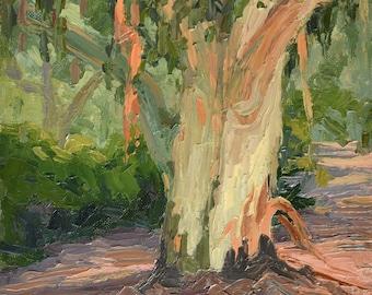 Eucalyptus Shedding (LA County Arboretum), Tree painting, Oil painting, Plein aire landscape painting, California landscape