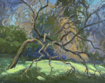 Branches Reaching (Arroyo Seco, Pasadena), Tree painting, Oil painting, Plein aire landscape painting, California landscape