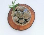 RARE Australian Stone ~ Nundoorite (aka Nunderite/Nundorite)