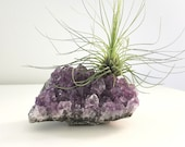 Crystal Air Plant, Amethyst Cluster, Tillandsia Plant, Boho Crystal décor, Zen gifts for Crystal Lovers, Calming Crystals