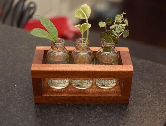 Mahogany plant holder. Hard wood propagation station for the home. Tiny box planter. Mini Mason jars holder