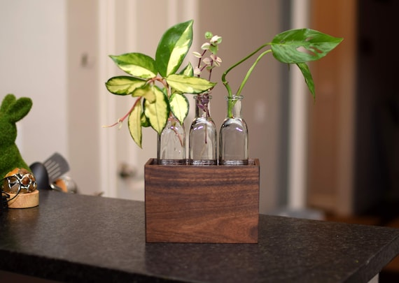 Walnut Propagation Station with Three Bottles. Solid Hard Wood Box. Perfect Gardener Gift. Pencil Box Desk Accessory.