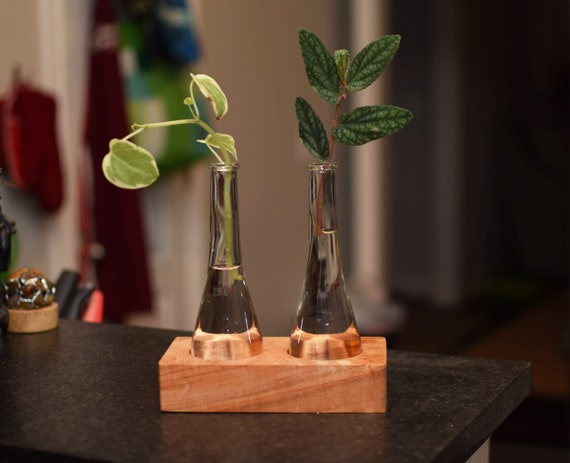 Cherry Hardwood Plant Propagation Station with Glass Vases. Succulent Growing Planter. Water Hydroponic Stand for Plants.