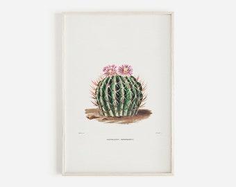 Enchino Cactus Drawing, Pink Cactus Flowers, Botanical Drawing, Cactus Illustration, Pink Floral Cacti, Succulent Wall Art, Boho Digital Art