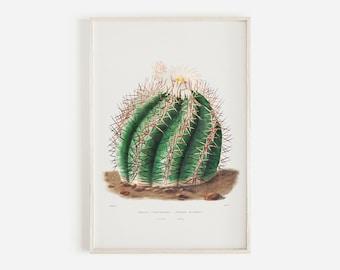 Turks Head Cactus Print, Vintage Succulent, Barrel Cactus Drawing, Boho Cactus Poster, California Plant Life, Botanical Illustration