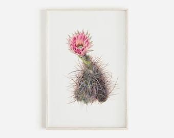 Cactus Flower Illustration, Cucumber Cactus Wall Art, Boho Home Decor, Vintage Botanical Print, Arizona Cactus Art, Antique Cactus Drawing