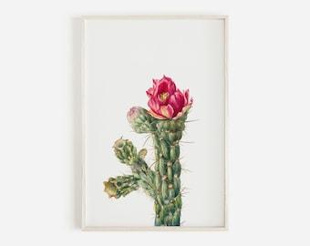 Walkingstick Cholla, Cholla Cactus Print, Vintage Illustration, Botanical Wall Art, Succulent Poster, Cholla Desert Print, Vintage Cacti Art