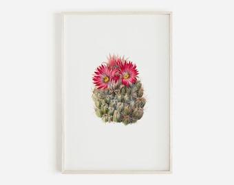 Hedgehog Cactus Drawing, Succulent Print, Botanical Illustration, Vintage Cactus Poster, Desert Digital Art, California Cacti, Cactus Flower