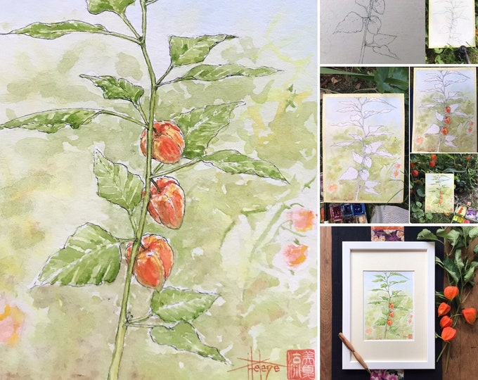 Original watercolor, the physalis of the garden. Hand painted painting.