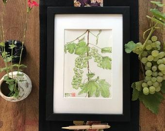 Original watercolour painting, the vine. Hand-painted theme